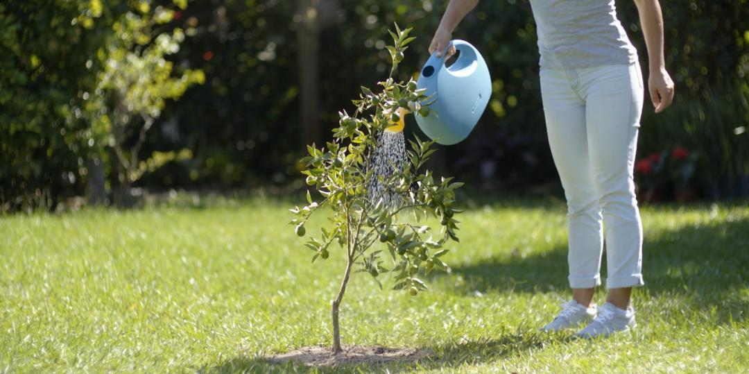 Plante árvores e dê mais vida ao seu quintal