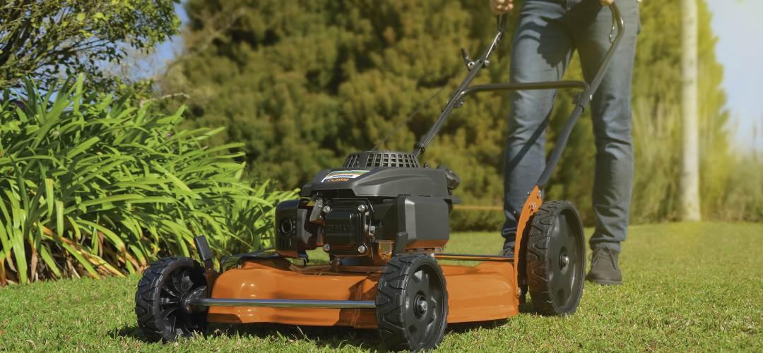 5 dicas para deixar seu gramado saudável e verdinho