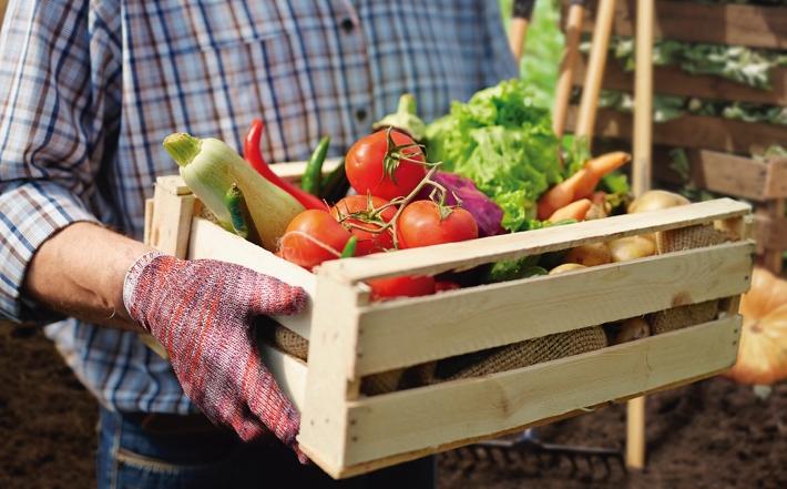 Agricultura familiar como fonte de alimentação sustentável