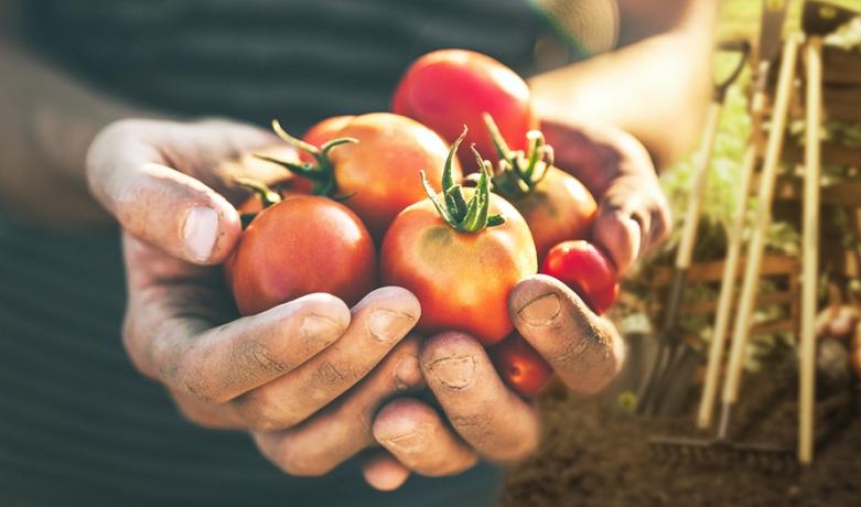 Quer ter alimentos e temperos sempre frescos à mesa? Então faça sua própria horta!