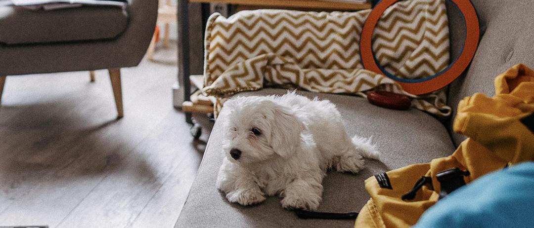 Confira cuidados indispensáveis com seu cão