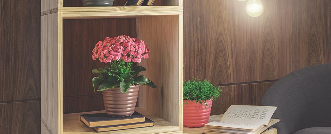 Confira dicas para cuidar das flores dentro de casa