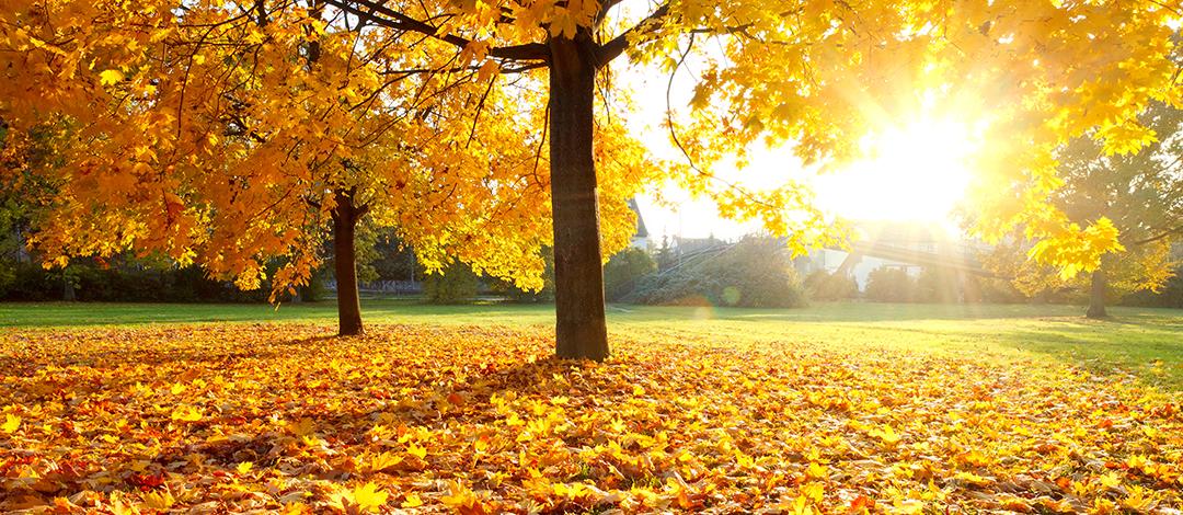Como manter o jardim limpo e bonito com a chegada do outono