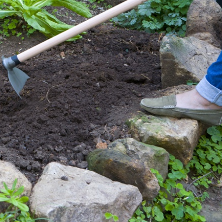 Planting in the garden: flower beds