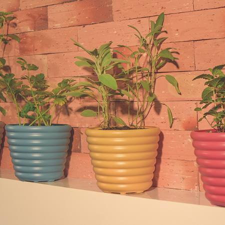 Decore la casa con plantas