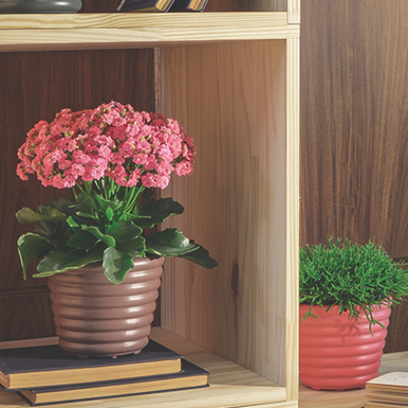 Check out these tips for taking care of flowers inside the home