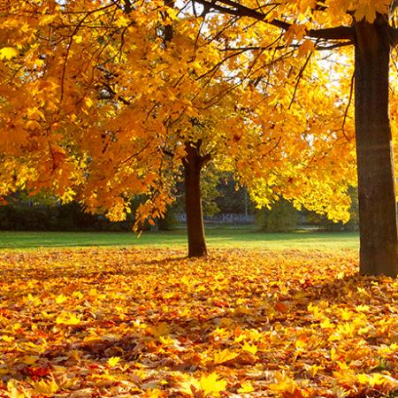 Cómo mantener el jardín limpio y bonito en otoño